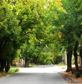Calles arboladas de la ciudad de Mendoza- Fuente: http://www.chacrasdemendoza.com.ar/